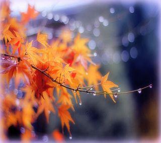 Обои на телефон красота, природа, листья, крутые, капли, дождь