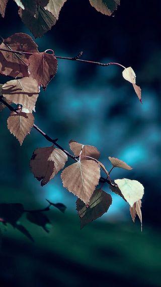 Обои на телефон красота, синие, природа, осень, листья, лес, золотые, боке, s8, s7, gold leaf