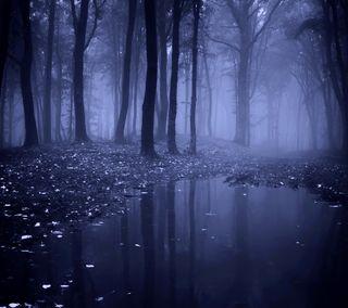Обои на телефон утро, туман, лес