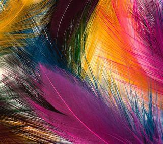 Обои на телефон цветные, перо, feathered