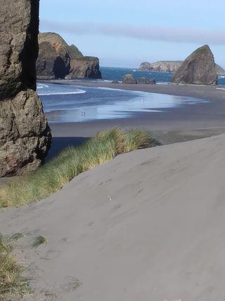 Обои на телефон пляж, песок, океан, берег, ocean dunes