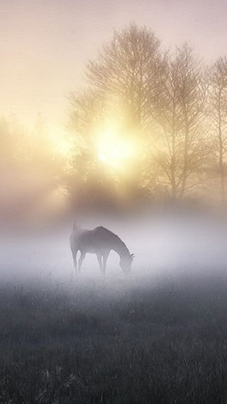 Обои на телефон туман, утро, солнце, лошадь, дерево, morning fog