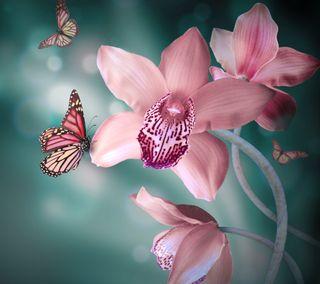 Обои на телефон бабочки, цветы