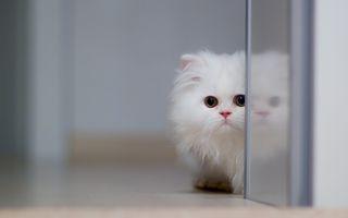 Обои на телефон милые, маленький, кошки, котята, коты