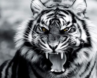 Обои на телефон тигр, рык, коты, roar of the tiger, prowlers, predators, felines, carnivors