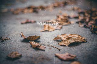 Обои на телефон вместе, цитата, отношения, осень, любовь, листья, высказывания, whatever, love