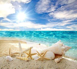 Обои на телефон солнечный свет, ракушки, раковина, пляж, морская звезда, море