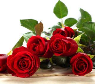Обои на телефон валентинка, цветы, розы, прекрасные, любовь, красые, love, beautiful red