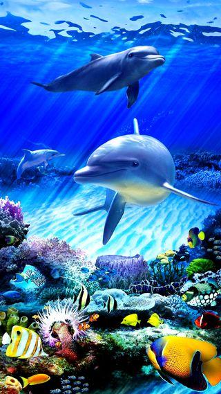 Обои на телефон рыби, рыба, океан, дельфины
