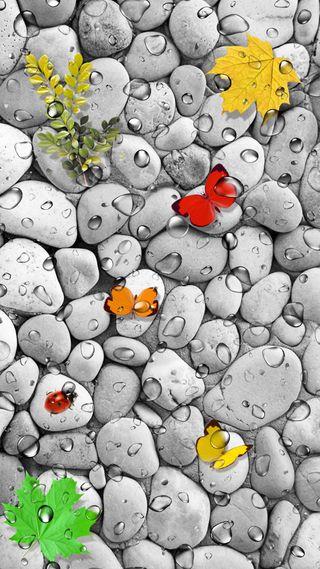 Обои на телефон камни, природа, листья, дождь, божья коровка, бабочки, pebble