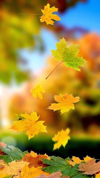 Обои на телефон осень, природа, листья