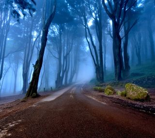 Обои на телефон португалия, природа, пейзаж, лес, дорога, деревья