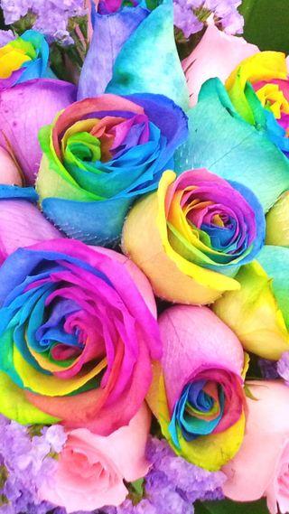 Обои на телефон симпатичные, розы, радуга, rainbow roses
