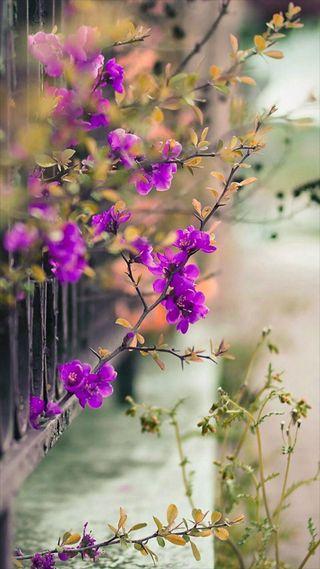 Обои на телефон вид, весна, цветы, розовые, природа, ветви