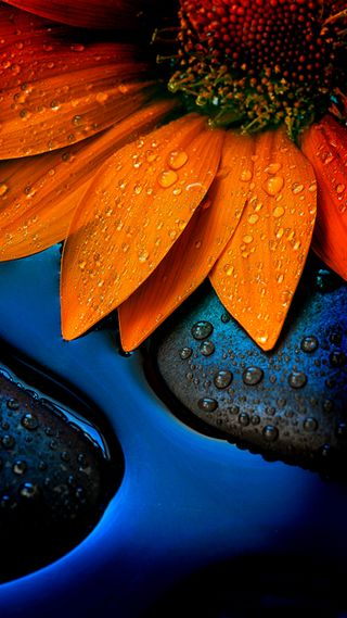 Обои на телефон подсолнухи, оранжевые
