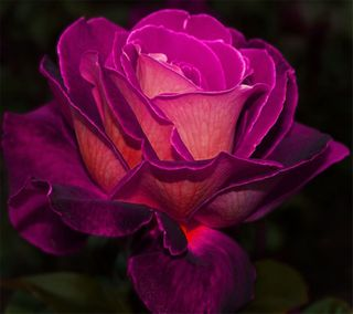 Обои на телефон лепестки, цветы, розовые, приятные, прекрасные, новый, дизайн, арт, hd, art