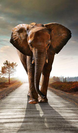 Обои на телефон слон, экран, цветные, телефон, природа, закат, животные, elephant 4k, 4k