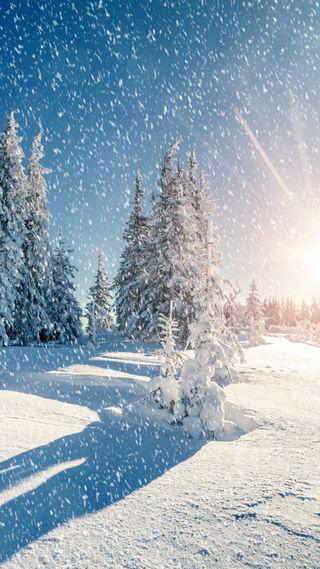 Обои на телефон солнечный свет, природа, зима, деревья, snowing, hd, 1080p