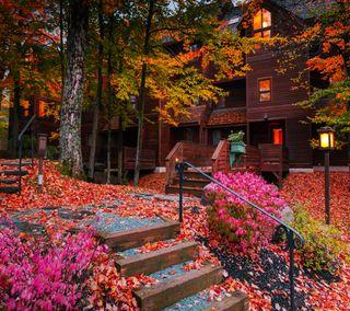 Обои на телефон сезон, осень, листья, дерево