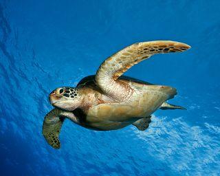 Обои на телефон черепахи, море