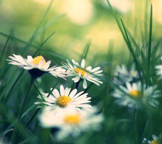 Обои на телефон утро, трава, природа, листья, время, весна, spring time hd, spring time, nexus, hd, 3д, 3d
