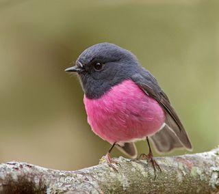 Обои на телефон птицы, маленький