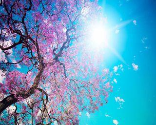 Обои на телефон релакс, солнечный свет, весна