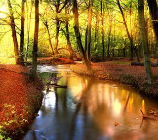 Обои на телефон река, осень