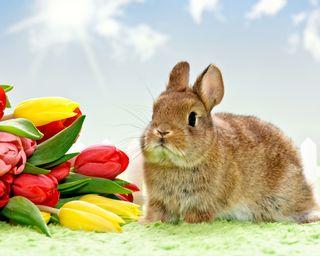 Обои на телефон кролики, тюльпаны, природа, пасхальные, кролик, восход