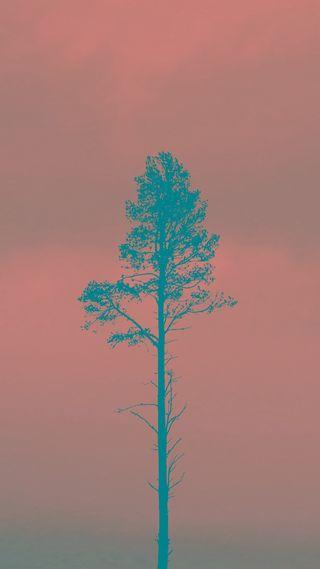 Обои на телефон странные, сосна, синие, розовые, простые, природа, небо, крутые, дерево, pink sky pine