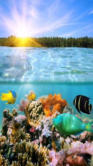 Обои на телефон reef, море, тропические, подводные, кораллы, рыби