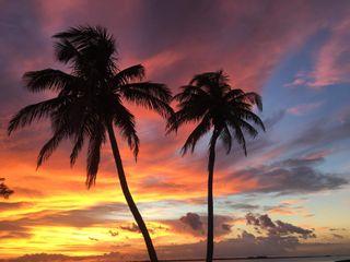 Обои на телефон пальмы, красочные, деревья, дерево, calming