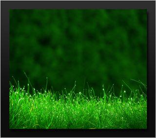 Обои на телефон природа, зеленые, вода, трава, макро, мокрые, роса