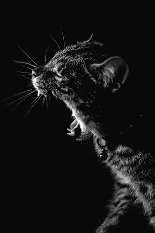 Обои на телефон черно белые, природа, котята, злые, животные, angry kitten