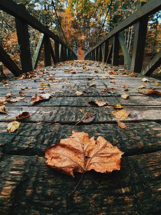 Обои на телефон хэллоуин, фон, сцены, природа, осень, деревья, вид, hd, guzel, 4k