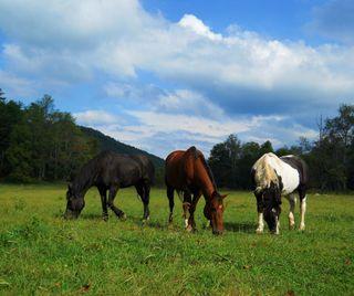 Обои на телефон лошади, животные, 3 amigos