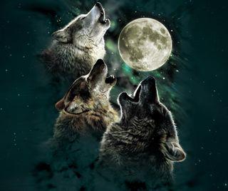 Обои на телефон волк, gsdf, dfhg