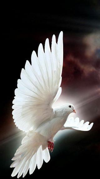 Обои на телефон птицы, крылья, белые