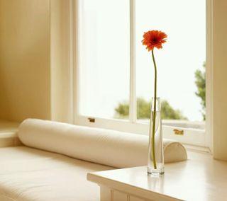 Обои на телефон маленький, цветы, белые, little flower
