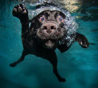 Обои на телефон собаки, подводные