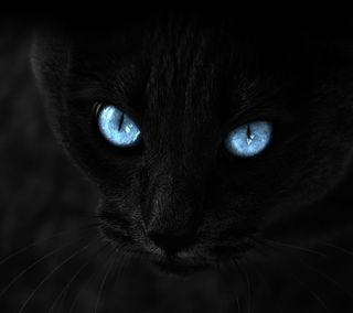 Обои на телефон кошки, черные, коты, глаза, hd