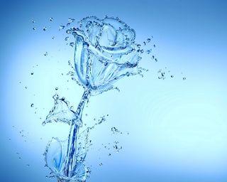 Обои на телефон капли, цветы, розы, вода, брызги, аква