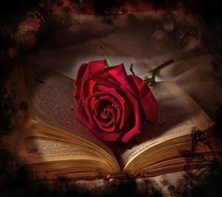 Обои на телефон old book, красые, розы, старые, книга