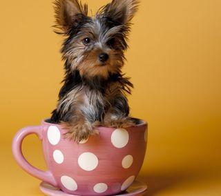 Обои на телефон щенки, собаки, милые, puppy in the teacup, puppie, pup