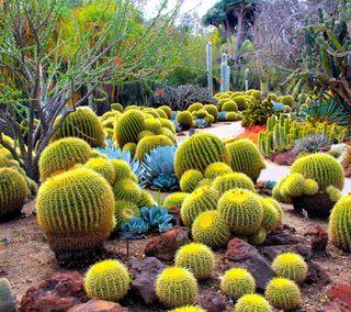 Обои на телефон сад, растения, природа, кактус, деревья