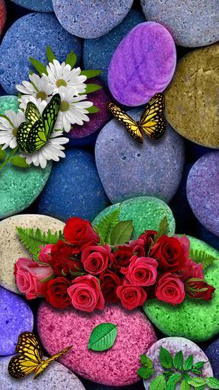 Обои на телефон камни, розы, маргаритка, листья, зеленые, bytterfly