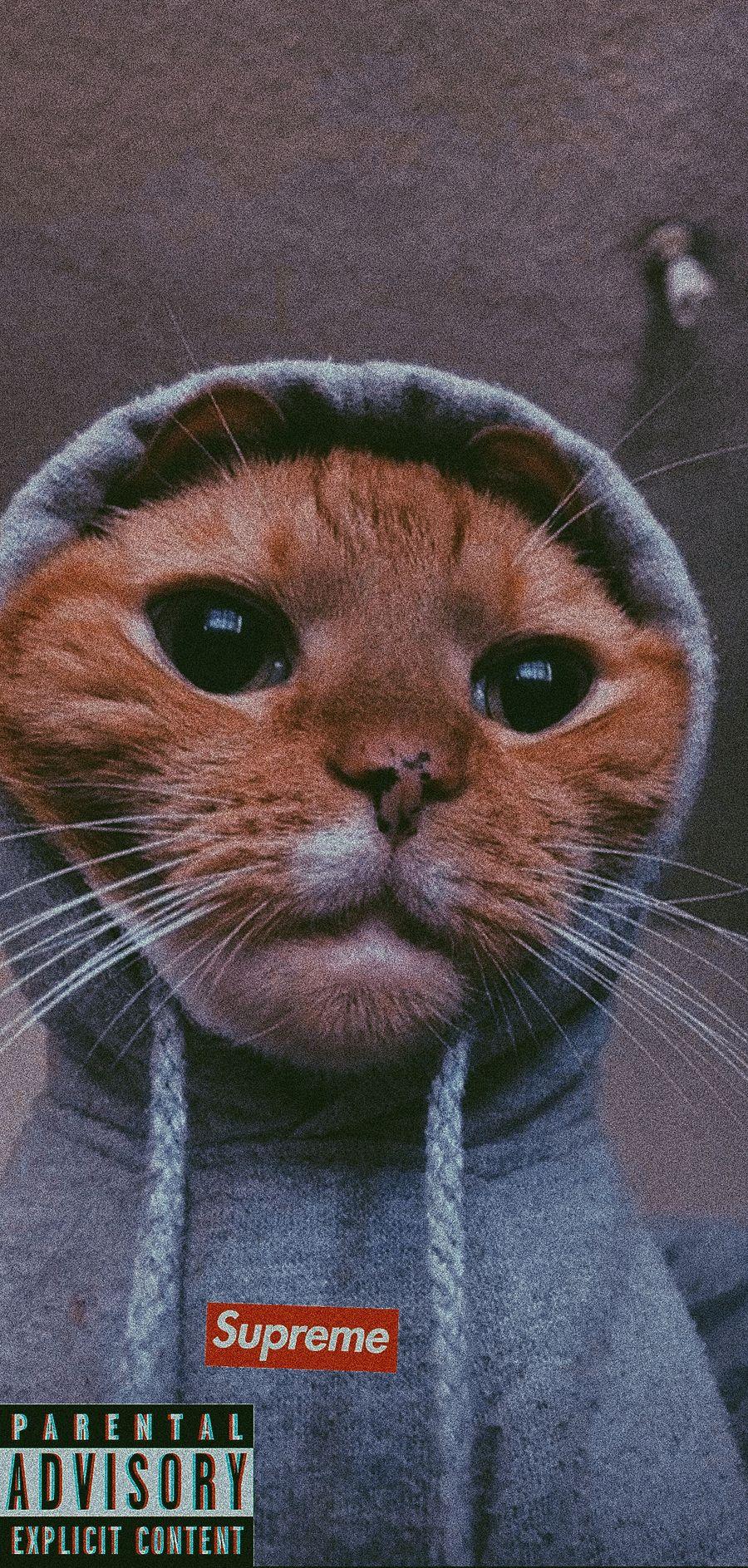 Обои на телефон чудо, кошки, котята, коты, supreme, hoddie