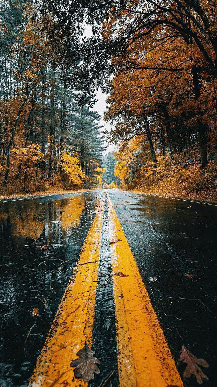 Обои на телефон природа, осень, мокрые, листья, дорога, дождь, дерево, wet road