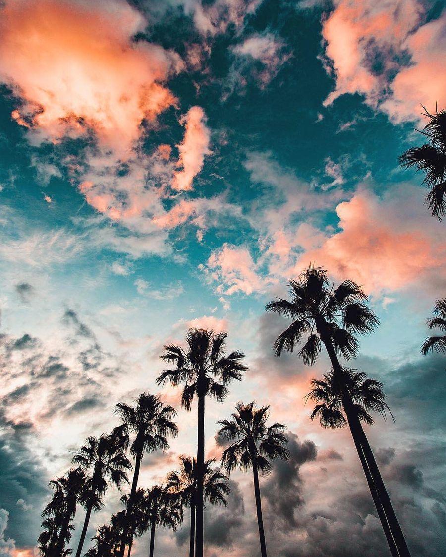 Обои на телефон путешествие, природа, пляж, пальмы, любовь, красочные, калифорния, деревья, pixels, love, hdr, fahad nur
